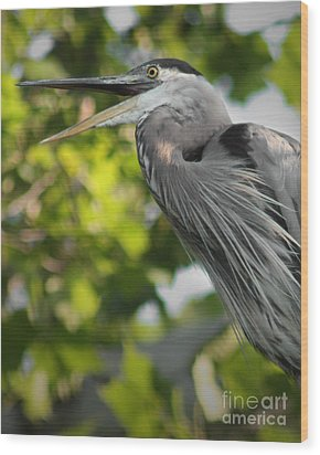 Wood Print featuring the photograph Talking Heron by Anita Oakley