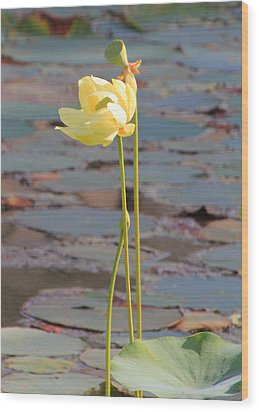 Tall And Golden Wood Print by Rosalie Scanlon