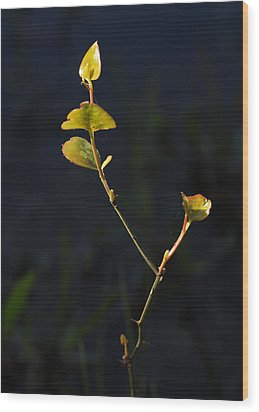 Wood Print featuring the photograph Tall And Proud by Susan D Moody