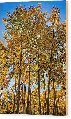 Tall Aspen With Sunstar Wood Print