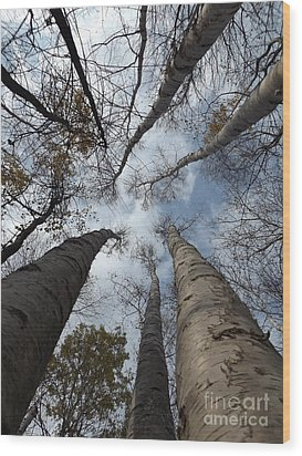 Tall Birch Circle Wood Print