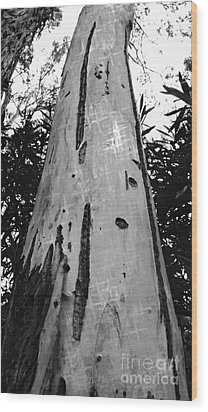 Wood Print featuring the photograph Tall by Clare Bevan