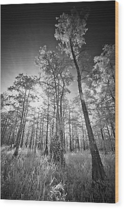 Tall Cypress Trees Wood Print