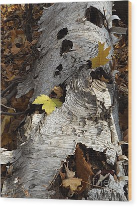 Tall Fallen Birch With Leaves Wood Print