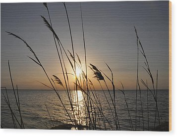 Tall Grass Sunset Wood Print by Bill Cannon