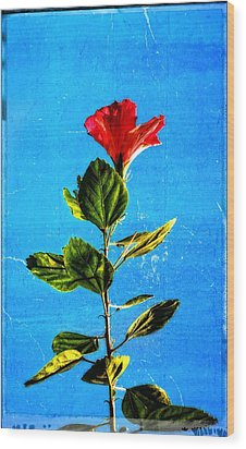 Tall Hibiscus - Flower Art By Sharon Cummings Wood Print by Sharon Cummings