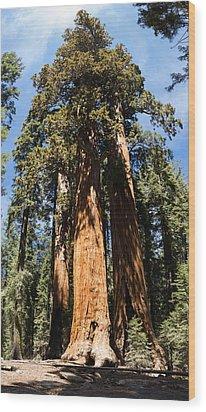 Tall One Wood Print