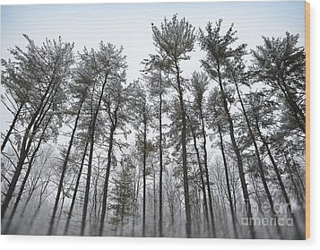 Tall Snow Covered Trees Wood Print by Sharon Dominick