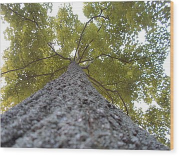 Tall Tree Wood Print by Jenna Mengersen