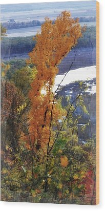 Tall Yellow Tree Wood Print by Marty Koch