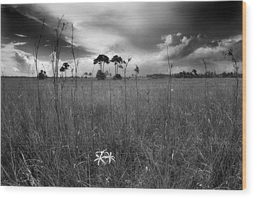 Tamiami Trail Wood Print