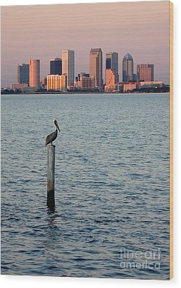 Tampa Skyline And Pelican Wood Print by Carol Groenen
