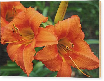 Wood Print featuring the photograph Tangerine Lush Daylily 2 by Bruce Bley