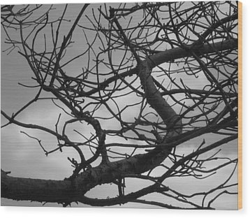 Tangled By The Wind Wood Print