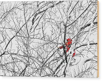 Tangled Wood Print by Diana Angstadt