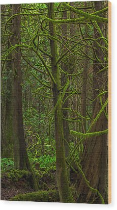 Wood Print featuring the photograph Tangled Forest by Jacqui Boonstra