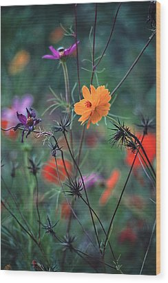 Tangles - A Dance Of Flowers And Weeds Wood Print by Michael Flood