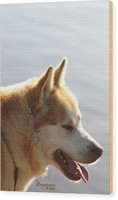 Tanka - Husky Wood Print by EricaMaxine  Price