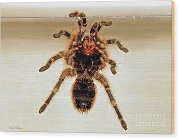 Wood Print featuring the photograph Tarantula Hanging On Glass by Susan Wiedmann