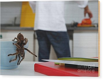 Tarantula Trying To Escape Wood Print by Emilio Scoti