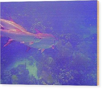 Tarpon Reef Wood Print by Carey Chen