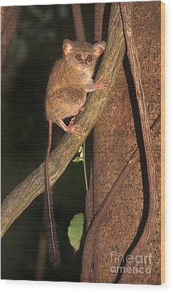 Wood Print featuring the photograph Tarsius Tarsier  by Sergey Lukashin