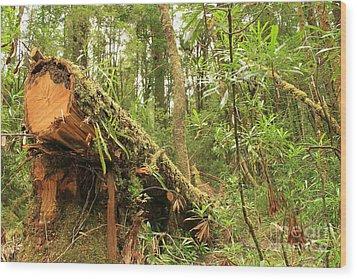Tasmanian Rain Forest All Profits Go To Hospice Of The Calumet Area Wood Print