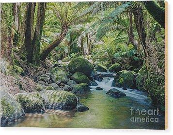 Tasmanian Rainforest Wood Print by Matteo Colombo