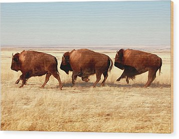 Tatanka Wood Print by Todd Klassy