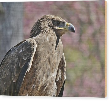 Tawny Eagle Amongst The Cherry Blossoms Wood Print by Paulette Thomas