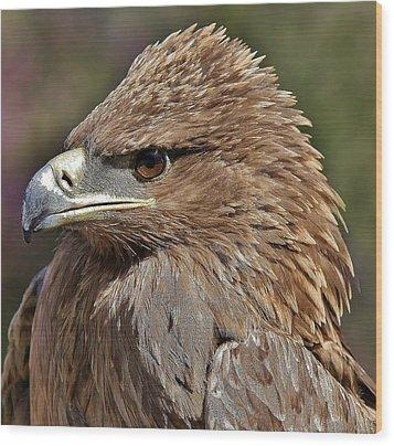 Tawny Eagle Up Close Wood Print by Paulette Thomas