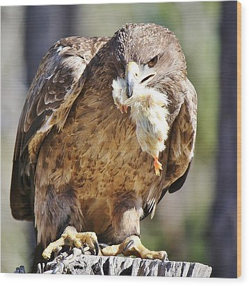 Tawny Eagle With Chicken Dinner Wood Print by Paulette Thomas