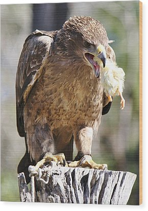 Tawny Eagle With His Prey Wood Print by Paulette Thomas