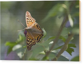 Tawny Emperor On Hibiscus Wood Print by Shelly Gunderson