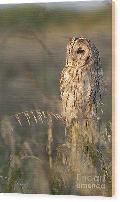 Tawny Owl Wood Print by Tim Gainey
