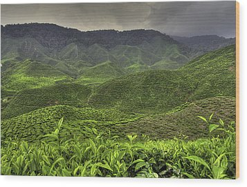 Tea Farm Wood Print by Mario Legaspi