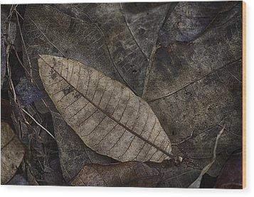 Teak And Mango Wood Print by David Longstreath