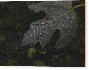 Tears Of A Leaf Wood Print by Michael Murphy