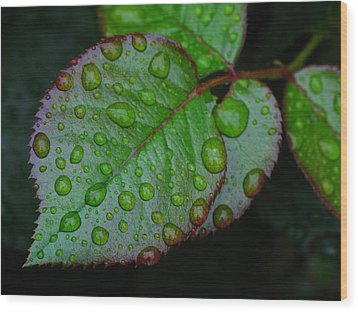 Teary Rose Leaf Wood Print by Juergen Roth