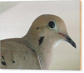 Teenage Dove Wood Print