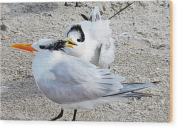 Telling Secrets Royal Terns Wood Print by Judy Via-Wolff