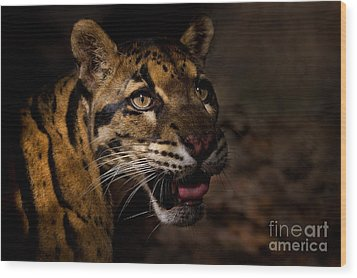 Tenacious Embers Wood Print by Ashley Vincent