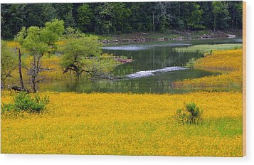 Tennessee Black-eyed Susan Field Wood Print by Kathy Barney