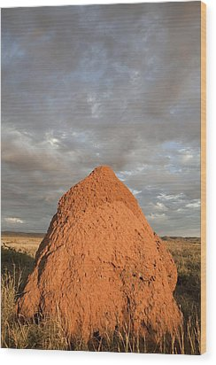 Termite Mound, Exmouth, Australia. Wood Print by Science Photo Library