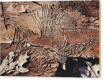 Termite Trails Wood Print by Kevin Grant