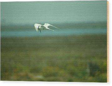Wood Print featuring the photograph Tern In Flight by Bonnie Muir
