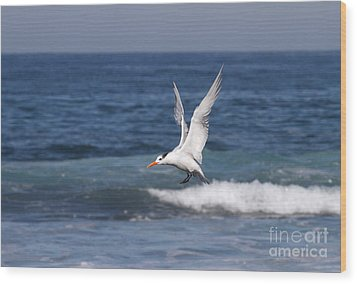 Tern In The Surf Wood Print by Ruth Jolly