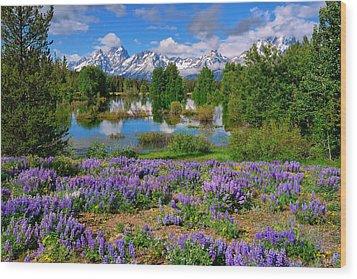 Teton Spring Lupines Wood Print