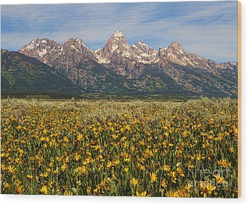 Tetons And Yellow Wood Print by Edward R Wisell