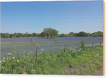Wood Print featuring the photograph Texas Blue Bonnets by Shawn Marlow